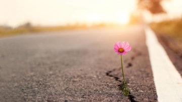 Primo piano, fiore che spunta dalla crepa di una strada con un tramonto sullo sfondo